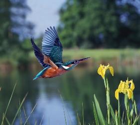 kingfisher press printing company kingfisher green policy